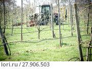 Купить «mowing in apple orchard», фото № 27906503, снято 18 августа 2018 г. (c) PantherMedia / Фотобанк Лори