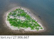 Купить «High angle view of Wels catfish (Silurus glanis) gathering around small island in river to predate pigeons on the shore, Tarn, River Tarn, Albi, France, July.», фото № 27906667, снято 22 февраля 2018 г. (c) Nature Picture Library / Фотобанк Лори