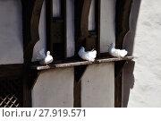 Купить «white doves on enem timbered house in the wartburg», фото № 27919571, снято 9 декабря 2018 г. (c) PantherMedia / Фотобанк Лори