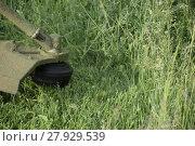 Купить «Mowing green grass using a fishing line trimmer», фото № 27929539, снято 20 мая 2018 г. (c) PantherMedia / Фотобанк Лори