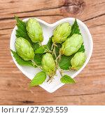 Купить «homeopathy and cooking with herbs,hops», фото № 27929559, снято 24 января 2019 г. (c) PantherMedia / Фотобанк Лори