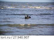 pelicans on sanibel island. Стоковое фото, фотограф Daniela Stärk / PantherMedia / Фотобанк Лори