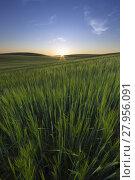 Купить «Sunset At The Meadow», фото № 27956091, снято 22 июня 2018 г. (c) PantherMedia / Фотобанк Лори