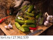 Купить «salt cucumbers briefly stored», фото № 27962539, снято 10 июля 2020 г. (c) PantherMedia / Фотобанк Лори