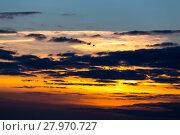 Купить «Birds flying in sunset», фото № 27970727, снято 18 марта 2019 г. (c) PantherMedia / Фотобанк Лори