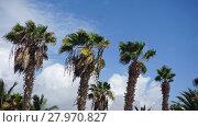 Купить «palm tree», фото № 27970827, снято 24 марта 2018 г. (c) PantherMedia / Фотобанк Лори