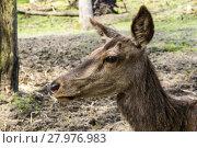 Купить «Moose Portrait», фото № 27976983, снято 26 мая 2018 г. (c) PantherMedia / Фотобанк Лори