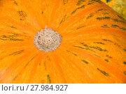 Купить «Fresh orange pumpkin close up», фото № 27984927, снято 20 июля 2019 г. (c) PantherMedia / Фотобанк Лори