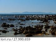 Купить «island of vir,croatia», фото № 27990659, снято 14 ноября 2018 г. (c) PantherMedia / Фотобанк Лори