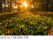 Купить «Autumn tree leafs on grass background », фото № 28004735, снято 27 апреля 2018 г. (c) PantherMedia / Фотобанк Лори