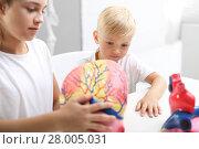 Купить «Lekcja anatomii. Budowa człowieka. Dzieci oglądają model ludzkiego serca.», фото № 28005031, снято 21 мая 2018 г. (c) PantherMedia / Фотобанк Лори