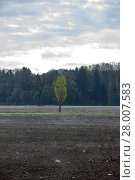Купить «plowed field with light fog in the countryside in styria», фото № 28007583, снято 19 февраля 2019 г. (c) PantherMedia / Фотобанк Лори