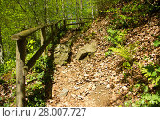Купить «paved trail in a forest in styria», фото № 28007727, снято 21 июня 2018 г. (c) PantherMedia / Фотобанк Лори