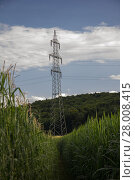 Купить «electricity pylons behind cornfield with partly cloudy skies in styria», фото № 28008415, снято 20 марта 2019 г. (c) PantherMedia / Фотобанк Лори