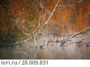 Купить «Birch tree near the river on a misty morning», фото № 28009831, снято 19 сентября 2019 г. (c) PantherMedia / Фотобанк Лори