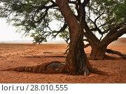 Купить «Namib desert, Namibia, Africa», фото № 28010555, снято 29 января 2016 г. (c) Знаменский Олег / Фотобанк Лори