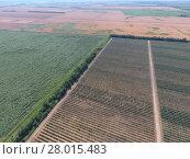 Купить «Top view of the garden of dwarf apple trees», фото № 28015483, снято 19 февраля 2019 г. (c) PantherMedia / Фотобанк Лори
