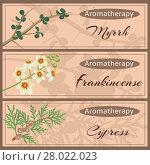 Купить «Aromatherapy set collection.», фото № 28022023, снято 24 февраля 2018 г. (c) PantherMedia / Фотобанк Лори