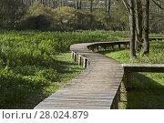 Купить «in the biotope on lake terlago», фото № 28024879, снято 22 апреля 2019 г. (c) PantherMedia / Фотобанк Лори