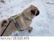 Купить «Dog walks in the winter.», фото № 28025415, снято 18 февраля 2018 г. (c) Елена Блохина / Фотобанк Лори