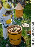 Купить «Beekeeper on apiary.  Working apiarist.  Beekeeper holding frame of honeycomb», фото № 28025723, снято 5 июля 2020 г. (c) PantherMedia / Фотобанк Лори