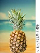 Купить «Large ripe pineapple on background of nature», фото № 28047499, снято 22 декабря 2017 г. (c) Сергей Молодиков / Фотобанк Лори