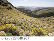 Купить «Sani Pass, Drakensberg Mountains, UNESCO World Heritage Site, South Africa», фото № 28048967, снято 20 мая 2019 г. (c) Nature Picture Library / Фотобанк Лори