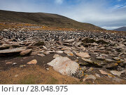 Купить «Lichen covered rocks with Rockhopper penguin (Eudyptes chrysocome) and Imperial shag (Phalacrocorax atriceps albiventer) colony beyond Saunders Island, Falkland Islands, November.», фото № 28048975, снято 25 марта 2019 г. (c) Nature Picture Library / Фотобанк Лори