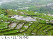 Купить «Terraced rice fields, Muong Hoa Valley, near Sapa, northern Vietnam.», фото № 28108043, снято 24 апреля 2017 г. (c) age Fotostock / Фотобанк Лори