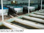 Купить «Tanks and incubators on fish farm», фото № 28114947, снято 4 февраля 2018 г. (c) Яков Филимонов / Фотобанк Лори