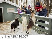Купить «Three children and two adults feed goats with bread in fold on winter day», фото № 28116007, снято 4 февраля 2017 г. (c) Losevsky Pavel / Фотобанк Лори