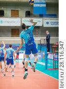 Купить «MOSCOW - NOV 5, 2016: Athlete jumps at volleyball game Dynamo (Moscow) and Ural (Ufa) in Palace of Sports Dynamo», фото № 28116347, снято 5 ноября 2016 г. (c) Losevsky Pavel / Фотобанк Лори