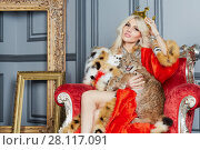 Купить «Young blonde woman in red cloak and crown sits in armchair with lynx cub», фото № 28117091, снято 14 ноября 2015 г. (c) Losevsky Pavel / Фотобанк Лори