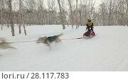 """Купить «Гонка на собачьих упряжках """"Берингия""""», видеоролик № 28117783, снято 4 марта 2018 г. (c) А. А. Пирагис / Фотобанк Лори"""