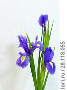 Купить «Beautiful spring bouquet of delicate purple irises on a light background», фото № 28118055, снято 7 января 2018 г. (c) Виктория Катьянова / Фотобанк Лори