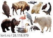 Купить «Set of fauna of North American animals.», фото № 28118979, снято 24 марта 2019 г. (c) Яков Филимонов / Фотобанк Лори