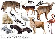 Купить «europe animals isolated», фото № 28118983, снято 20 марта 2019 г. (c) Яков Филимонов / Фотобанк Лори