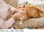 close up of owner stroking red cat in bed at home. Стоковое фото, фотограф Syda Productions / Фотобанк Лори