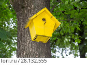 Купить «Wooden yellow birdhouse on a high tree in the public park», фото № 28132555, снято 7 августа 2017 г. (c) FotograFF / Фотобанк Лори