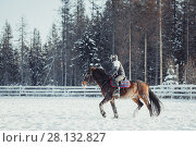 Купить «Winter teenage girl jump horse ride jumping», фото № 28132827, снято 26 января 2014 г. (c) Julia Shepeleva / Фотобанк Лори