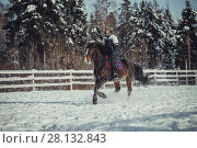 Купить «Winter teenage girl jump horse ride jumping», фото № 28132843, снято 26 января 2014 г. (c) Julia Shepeleva / Фотобанк Лори