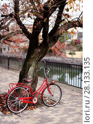 Купить «Red womens city bicycle parked at a cherry tree by a river in autumn on a street of Kyoto, Japan.», фото № 28133135, снято 20 ноября 2017 г. (c) age Fotostock / Фотобанк Лори