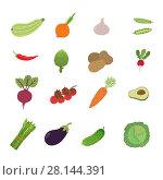 Купить «Illustration set vegetable», иллюстрация № 28144391 (c) Надежда Ворович / Фотобанк Лори