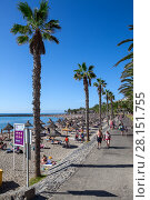 Пляж Playa del Camison и аллея Франсиско Андраде Фумеро, город Лос Кристианос, остров Тенерифе, Канары, Испания (2016 год). Редакционное фото, фотограф Кекяляйнен Андрей / Фотобанк Лори