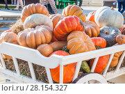 Урожай тыквы в телеге на ярмарке. Стоковое фото, фотограф Алёшина Оксана / Фотобанк Лори