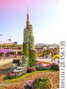 Купить «Парк цветов в Дубае (Dubai Miracle Garden). Объединённые Арабские Эмираты», фото № 28156135, снято 23 декабря 2014 г. (c) Сергей Афанасьев / Фотобанк Лори