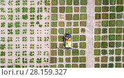 Купить «Looking directly down at man operating a riding lawn Sprayer as it sprays turf grass plots, Tifton, Georgia. USA.», фото № 28159327, снято 19 сентября 2017 г. (c) age Fotostock / Фотобанк Лори