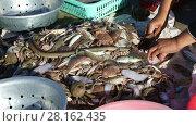 Купить «The hands of a Vietnamese fisherman sorts fresh catch seafood», видеоролик № 28162435, снято 29 декабря 2016 г. (c) Алексей Кузнецов / Фотобанк Лори