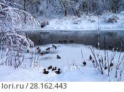 Купить «Зимний пейзаж. Свиблово. Юрловский народный парк», фото № 28162443, снято 6 февраля 2018 г. (c) Natalya Sidorova / Фотобанк Лори