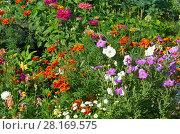 Купить «Клумба с яркими летними цветами на даче», эксклюзивное фото № 28169575, снято 21 августа 2017 г. (c) Елена Коромыслова / Фотобанк Лори